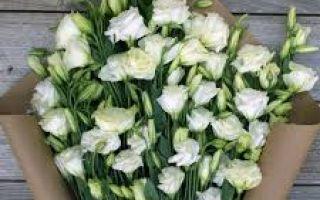 Эустома – эффектный цветок